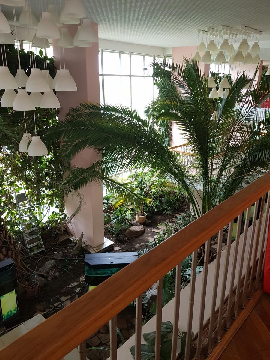 Вид со второго этажа на пальму с длиной листа до 7 м